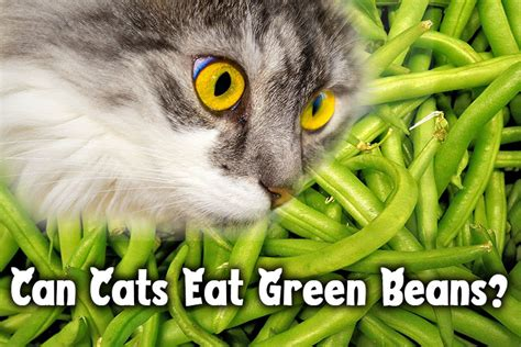 why do cats like green beans