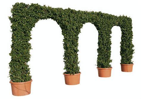 piante d arredo topiarie d arredo piante particolari il vivaio