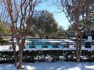 a snowy day in dallas steve