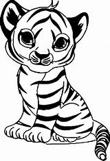 Tiger Coloring Printable Pages Cutest sketch template
