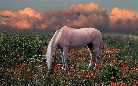 Download Nature Animals Wallpaper 1680x1050