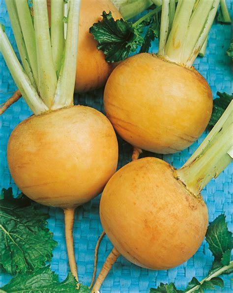 cuisiner le rutabaga jaune boule d 39 or navets graines potagères graines