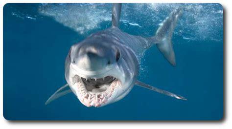 learn interesting shark facts   mako shark shark