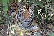 Top 10 Wild Animals