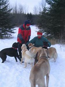 dr amanda glew first of the year montreal dog blog With dog walkers near me