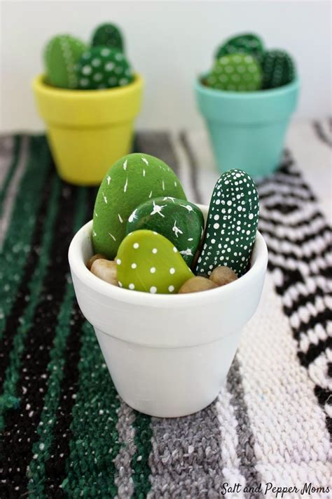 cactus5 | แคคตัส กระบองเพชร ไม้อวบน้ำ