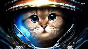 Cat Astronaut Wallpaper (page 2) - Pics about space