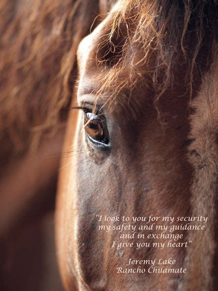 quotes horse trust strength visit painful jumps rides inspirational falls most riding reining