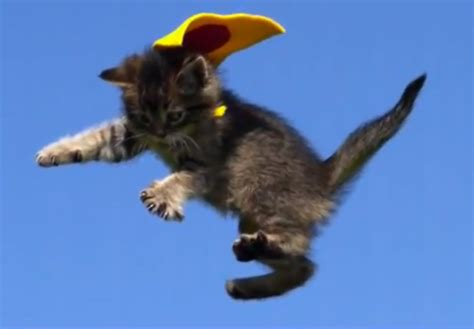flying with a cat adorable kittens flying in motion