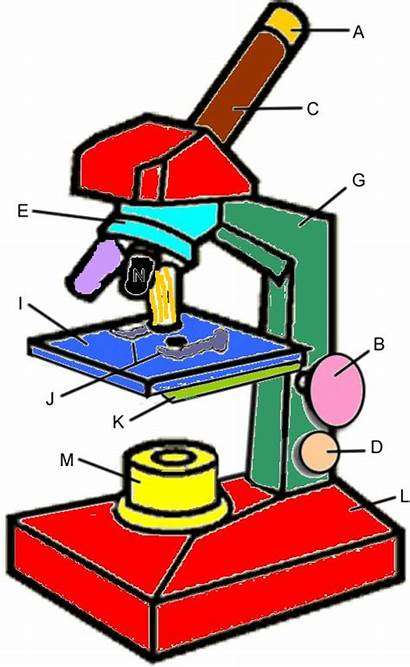 Microscope Key Clipart Parts Label Drawing Diagram