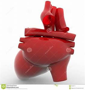Human Heart Back Side View Stock Illustration