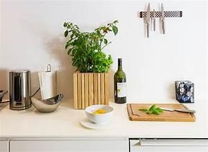 Kräutergarten In Der Wohnung : k chentipps kr uter in der wohnung ziehen ~ Watch28wear.com Haus und Dekorationen