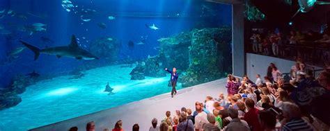 l aquarium de club l aquarium de copenhague danemark