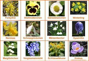 Blumenarten Az Mit Bild : blumennamen richtig schreiben l sung medienwerkstatt wissen 2006 2017 medienwerkstatt ~ Whattoseeinmadrid.com Haus und Dekorationen