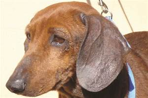 managing mrsa mrsp mrss dermatologic infections pets