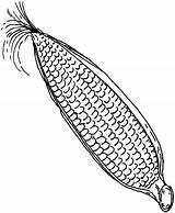 Corn Cob Sweet Coloring Pages Drawing Getdrawings Books sketch template