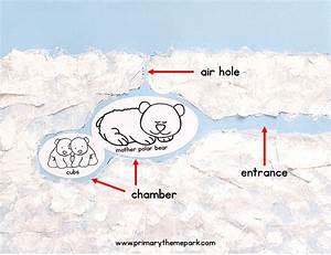 Polar Bear Steam Activity