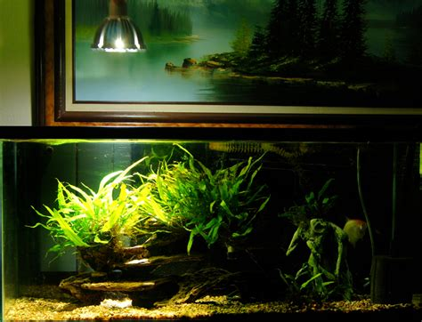 freshwater aquarium plant care substrate ferts co2 lighting
