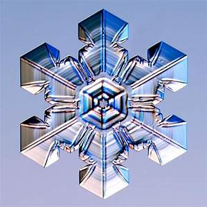 Symmetry in Nature - GCSE Maths - Marked by Teachers.com