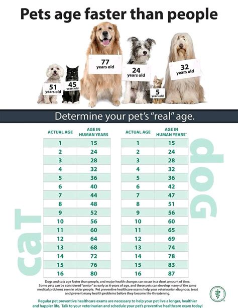 senior pet care newton animal clinic