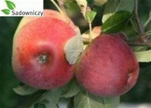Wann Apfelbäume Schneiden : apfel delikates ~ Lizthompson.info Haus und Dekorationen