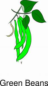 Green Beans Clip Art at Clker.com - vector clip art online ...