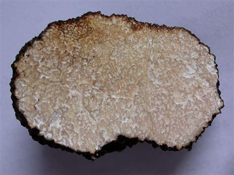comment cuisiner les truffes noires comment trouver les truffes d ete
