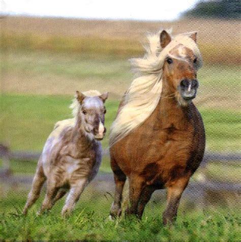 serviette arabella pferde serviettenrausch