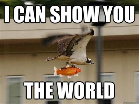 Funny Animal Meme Pictures - 30 funny animal captions part 11 30 pics amazing creatures