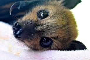 Baby Fruit Bat