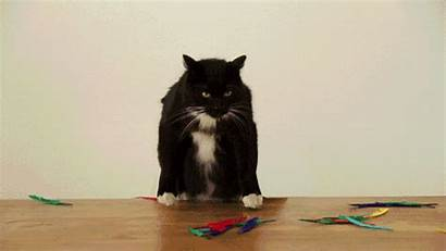 Cats Crazy Gifs Things Short Cat Animated
