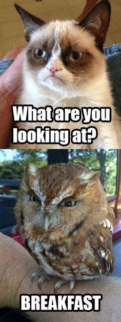 images  owl memes  pinterest memes owl
