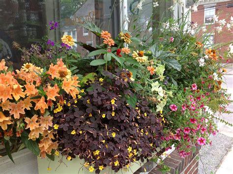 annual garden annuals container gardening carolyn s shade gardens