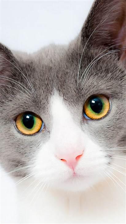 Cat Grey Iphone Wallpapers Mobile Desktop Itl