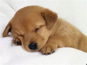 wonderful and marvelous pictures of puppy and dog | Nice ...