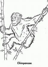 Patrol Chimpanzee sketch template