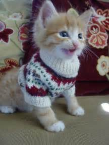 sweaters for cats these 26 cats wearing sweaters will put a smile