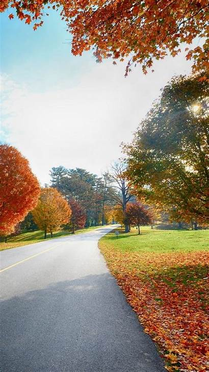 Background Road Wallpapers Trees Phone Nature Android
