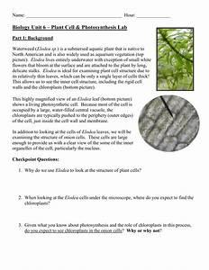 Microscope Elodea Leaf Cell