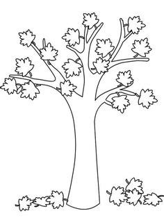 maple tree coloring page education tree coloring page