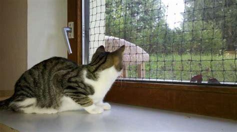 informationen zur haltung von katzen tierhilfe