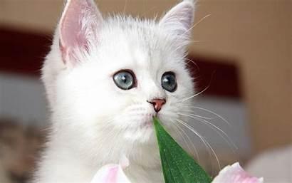 Kittens Kitten Cats Cutest Eyes Fanpop Cat