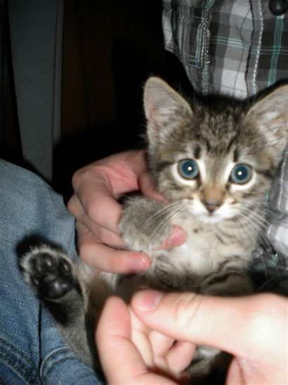 Adorable Ever Kitten Abandoned Wheel Found Well