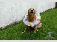 Wunderschöne + lustige Hunde Bilder auch zum Runterladen