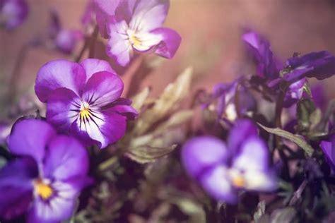 cantik  wangi ternyata  bunga  menyimpan
