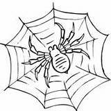 Spider Coloring Pages Spiders Web Supercoloring Hunting Printable sketch template