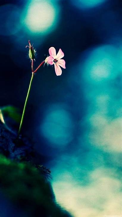 Vertical Screen Wallpapers Mobile Android 1080p Flower