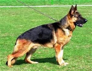 La displasia de cadera en perro historiasveterinarias/vetstories