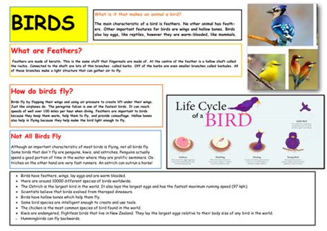 Facts About Birds Life Cycle Little Primary Teacher