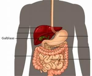 7 goede redenen om havermout te eten gezondheidsnet